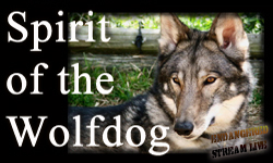 Spirit of the Wolfdog sm BNR
